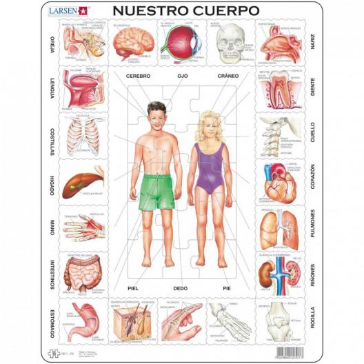 Puzle Educativo Larsen 35 piezas - Nuestro Cuerpo (español)
