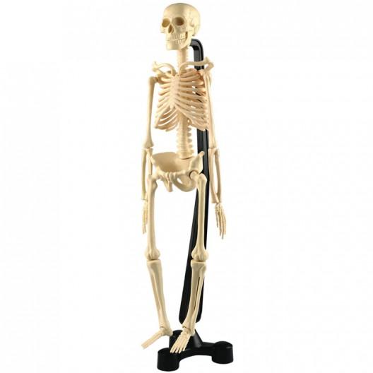 Mini Esqueleto 46 cm para el escritorio