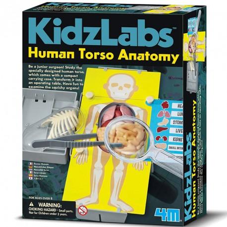 KidzLabs - Anatomía del Torso Humano