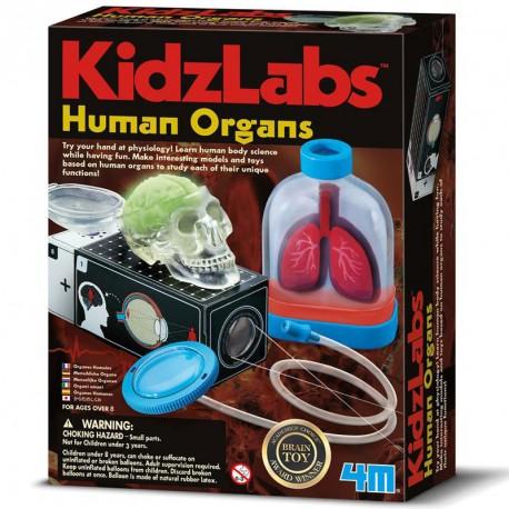 KidzLabs - Òrgans del cos humà