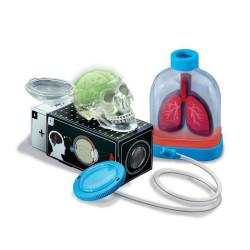 KidzLabs - Órganos del cuerpo humano