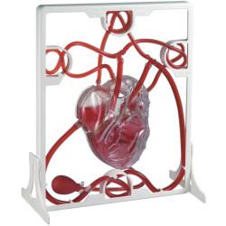 Corazón con función de bombeo